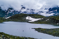 Norway, Jotunheimen. The mountains above Gjende Lake between Storådalen and Memurubu. A flock of Reindeer on the snowpatch.