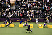 17.02.14 - Fox Sports at Westminster Kennel Club