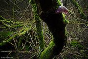 Christmas Day 2012 - Urban woodland near Northwich