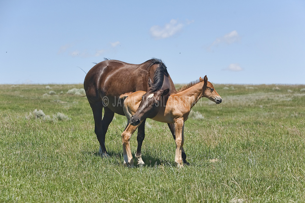 A mare bonding with her foal in a large open pasture on a warm summer's day.