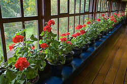 South America, Ecuador, Zuleta, geraniums line window of long hallway in hacienda