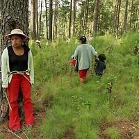 Villa de Allende, Méx.- Campesinos de la comunidad Mazahua de San Idelfonso que se oponen a la explotacion por parte de una empresa privada a quien le otorgo un permiso la SEMARNAT, se amarran con cuerdas y rebosos a los arboles durante un par de horas para evitar que se siga talando el bosque, denuncian que son afectados ya que por la tala sin supervicion de las autoridades se seco el manantial de las canoas de donde se abastecian de agua. Agencia MVT / Mario Vazquez de la Torre. (DIGITAL)<br /> <br /> NO ARCHIVAR - NO ARCHIVE