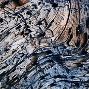 Dead tree trunk patterning detail in Joshua Tree National Park, California.
