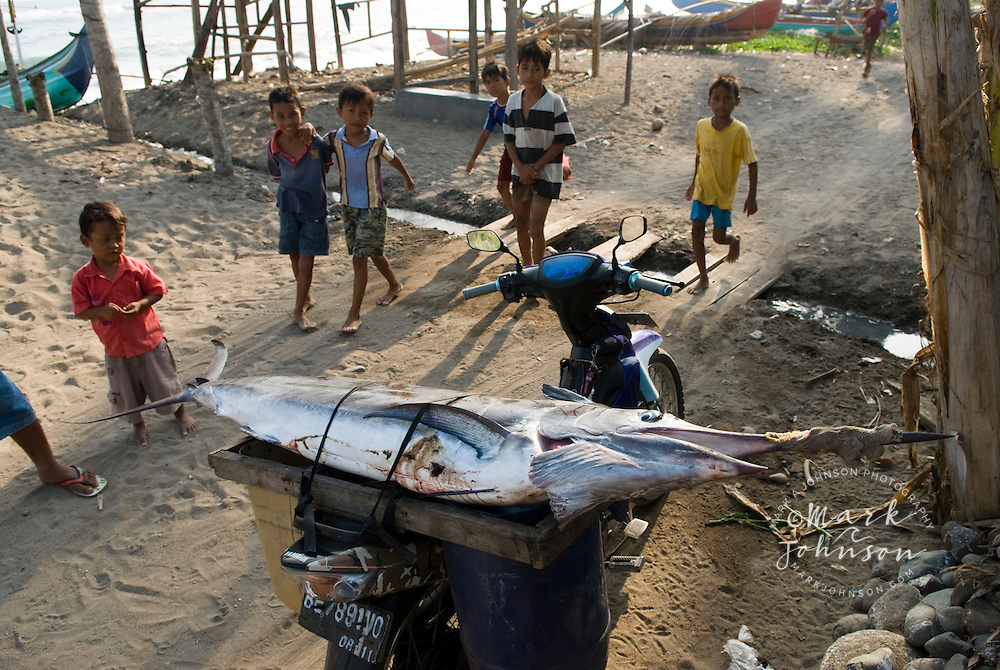 Boys gathered around swordfish tied to back of motorcycle in fishing village in S. Sumatra, Indonesia