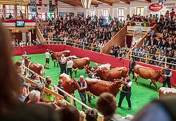 29.04.2018, Maishofen, AUT, XII Weltkongress Pinzgauer Rind, im Bild Übersicht Bewertung // Overview during the XII Pinzgauer cattle World Congress in Maishofen, Austria on 2018/04/29. EXPA Pictures © 2018, PhotoCredit: EXPA/ JFK
