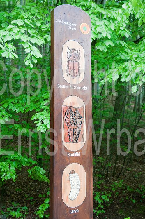 Tafel, Borkenkäfer-Lehrpfad, lIsenburg, Harz, Sachsen-Anhalt, Deutschland   bark beatle nature trail, Ilsenburg, Harz, Saxony-Anhalt, Germany