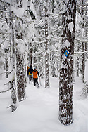 Rear view of three adults in snowshoes hiking through deep powder in a forest in Bend, Oregon.  (releasecode: jk_mr1033, jk_mr1035, jk_mr1034) (Model Released)