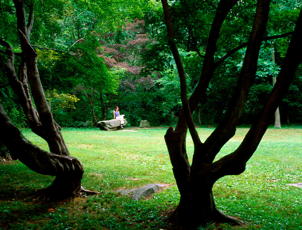 2 trees are silhouetted in the foreground in a park like setting with a woman reading on a stone bench in the background.
