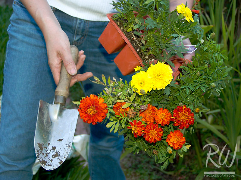 Female Gardener with her Flowers