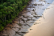 Downed mangrove trees along the banks of the Amazon River, approximately 50 miles northeast of Macapá.