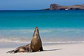 2005 - Galapagos Islands (Ecuador)