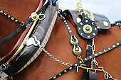 Class 15 - Decorated Harness Class