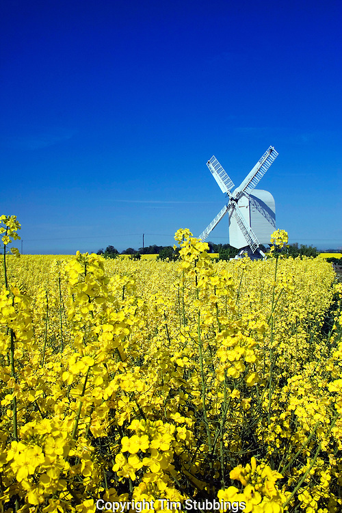 White, wood, timber windmill, yellow, rape, fields, English, countryside, Chillenden, Kent, England, UK