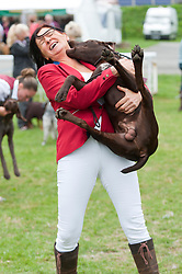 © Licensed to London News Pictures. 19/08/2018. Llanelwedd, Powys, UK. A puppy Pointer Retriver gets boistrous with it's owner after judging on the last day of The Welsh Kennel Club Dog Show, held at the Royal Welsh Showground, Llanelwedd in Powys, Wales, UK. Photo credit: Graham M. Lawrence/LNP