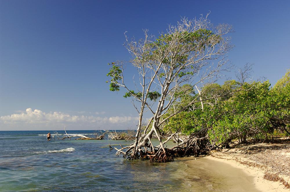 Mangroves, Playa Cana Gorda, Guanica Biosphere Reserve, Southcoast, Puerto Rico, Caribbean