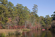 Autumn in pines on the Dead River; NJ, Pine Barrens; Great Egg Harbor River