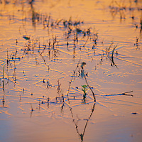 A frozen surface on the Rio Grande watershed at sunrise - golden magic in the details.