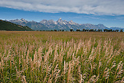 Grass in the field along Mormaon Row, Grant Teton National Park,Wyoming