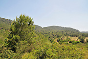 Israel, Carmel Mountain forest