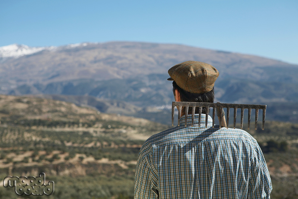 Farmer with rake on shoulder looking at orchard back view
