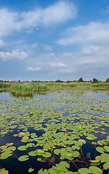 Naardermeer, Gooise Meren, Noord Holland, Netherlands