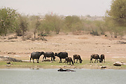 India, Rajasthan, Jaisalmer, Water buffalo on the shore of Gadi Sagar lake