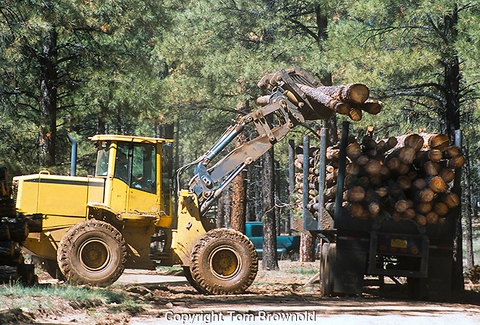 Loader putting pulp wood logs on a trailer to be transported to the mill