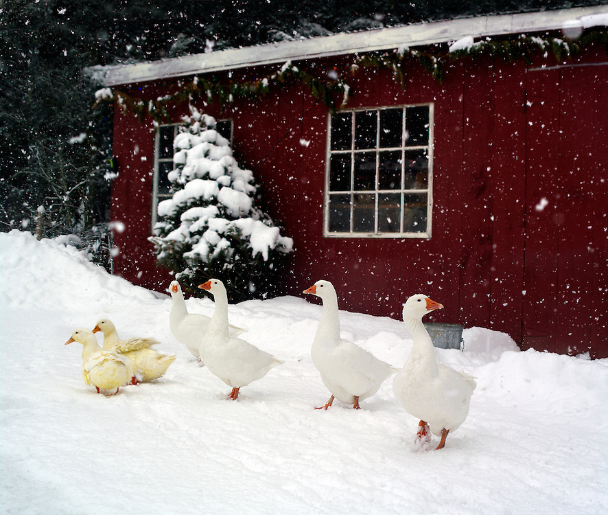 Winter chicken house