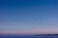 Beach with segulls at dawn in Essaouira, Morocco.