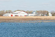 Farm and spring waterfowl, Brown County, South Dakota