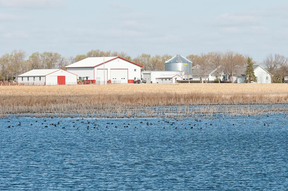 Farm and spring waterfowl, Brown County, South Dakota