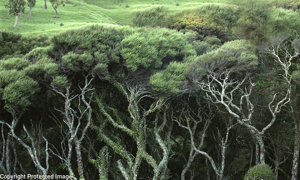 On the north tip of the South Island in New Zealand is this grove of trees within eyesight of the Tasman Sea.