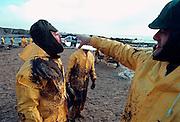 Frankrijk, Batz sur mer, 10-01-2000..Olievervuiling door het zinken van de olietanker Erica en de schoonmaak door vrijwilligers. De oliemaatschappij Total staat nu, vanaf 12-1-2007 terecht voor de gevolgen. Veel hulpverleners hebben een verhoogde kans opkanker, omdat destijds met beperkte bescherming werd gewerkt, en tienduizende vogels kwamen om vanwege dit ongeluk met deze tanker voor de kust...Foto: Flip Franssen/Hollandse Hoogte