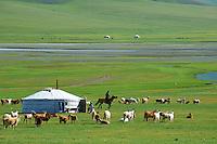 Mongolie, Province d'Ovorkhangai, Campement de yourte, Vallee de l'Orkhon. // Mongolia, Ovorkhangai province, Yurt camp, Orkhon valley.