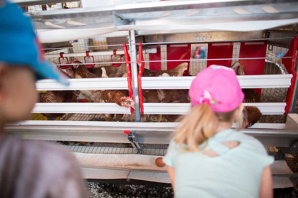 Kids check out some chickens in their enriched cages during the Breakfast on the Farm event near Shedden, Ontario, Saturday, June 24, 2017.<br /> Farmers Forum/ Geoff Robins