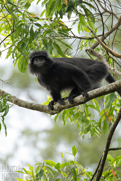IUCN red list : Vulnerable