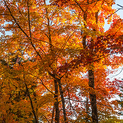 Fall foliage in Maine's Northern Forest.