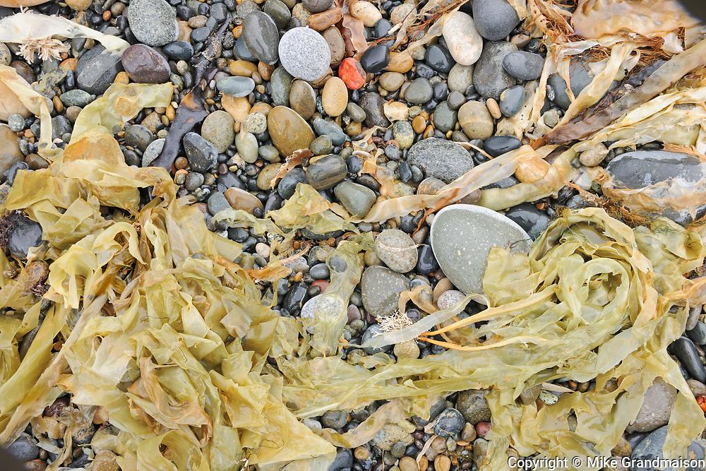 Rocks, sand and seaweed on Agate Beach.  Naikoon Provincial Park. Graham Island. , Haida Gwaii (formerly the Queen Charlotte Islands), British Columbia, Canada