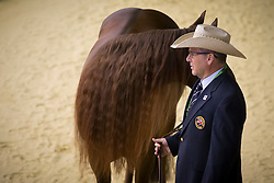 Francesca Sternberg, (GBR), Smart Like Valentino - Horse Inspection Reining  - Alltech FEI World Equestrian Games™ 2014 - Normandy, France.<br /> © Hippo Foto Team - Dirk Caremans<br /> 25/06/14