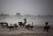 Desertification on the once arable land around Mopti and Niger river.