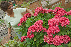 Older Woman cutting flowers in her garden,