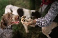 October 1992, Alba, Italy --- Man Holding Truffle Sniffed Out by Dog --- Image by © Owen Franken/CORBIS
