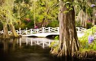 Interpretive landscape of white bridge, cypress and azaleas at Magnolia Plantation in Charleston, South Carolina