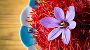TALIOUINE, MOROCCO - October 27th 2015 - A bee lands on a saffron flower that has already been harvested at a saffron farm in Taliouine, Sirwa Mountain Range, Souss Massa Draa region of Southern Morocco