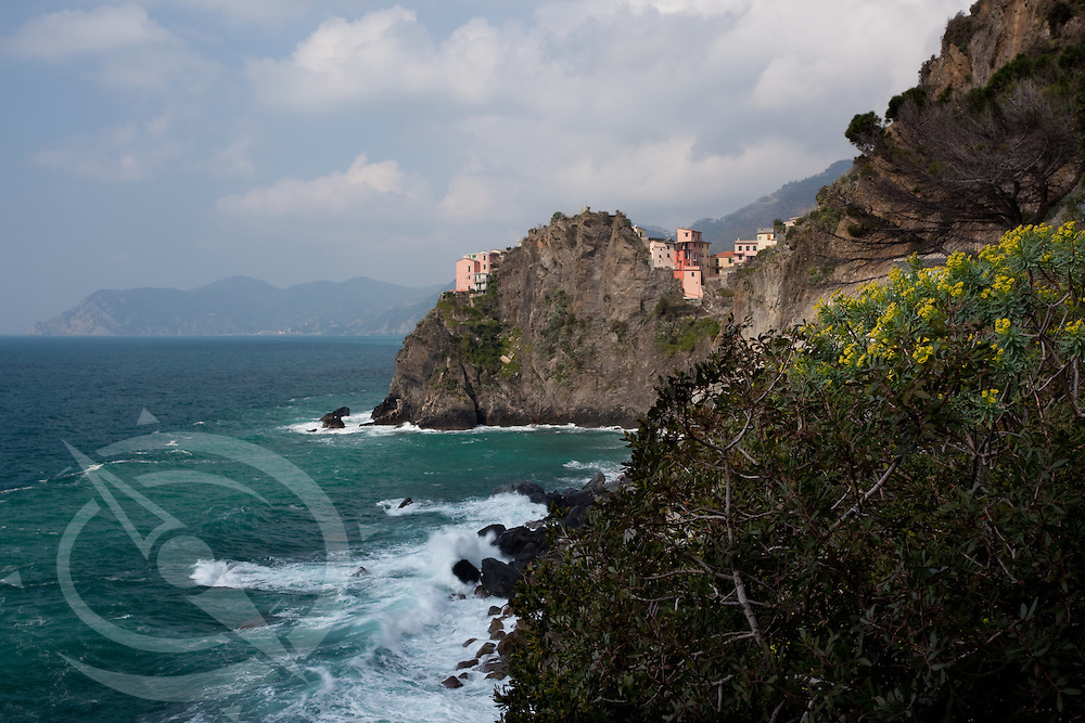 Yellow blooms and crashing waves enhance the beauty of the small towns of Cinque Terre