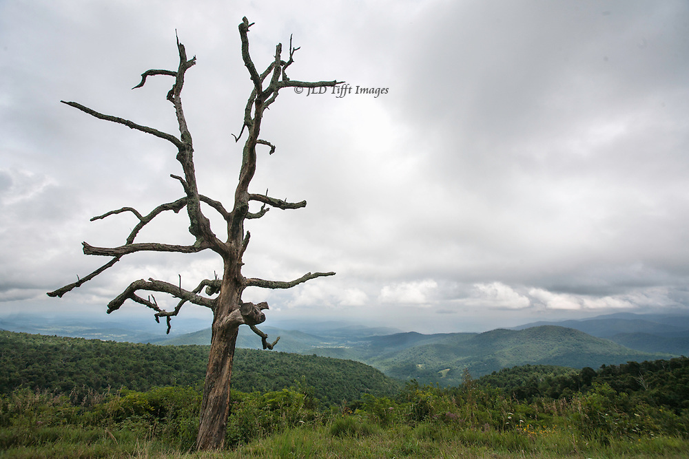 Dramatically shaped dead tree reaches its branches toward a landscape seen from the Skyline Drive in Virginia