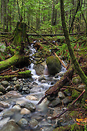 Boulders, stumps and fallen trees along an unnamed creek flowing into Rolley Lake, in Rolley Lake Provincial Park, Mission, British Columbia, Canada
