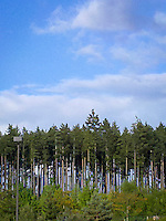 forest and sky with a light pole