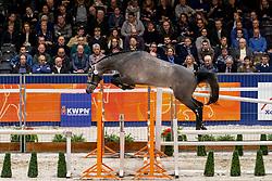 106, Levus<br /> KWPN Hengstenkeuring - 's Hertogenbosch 2019<br /> © Hippo Foto - Dirk Caremans<br /> 31/01/2019