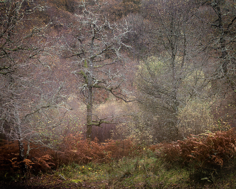 A bit of chaos from the woods at Capel Curig